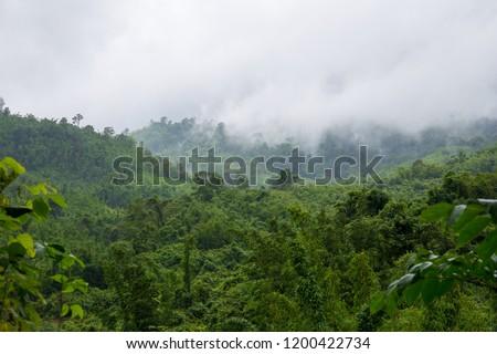 Tropical rainforest,Fog, Public Park, Rain, Rainforest, Tropical Rainforest