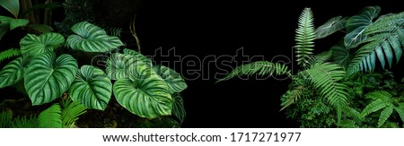 Photo of  Tropical rainforest foliage plants bushes (ferns, palm, philodendrons and tropic plants leaves) in tropical garden on black background, green variegated leaves pattern nature frame forest background.