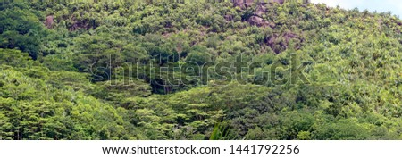 Tropical rainforest from above, Seychelles, Africa, panorama