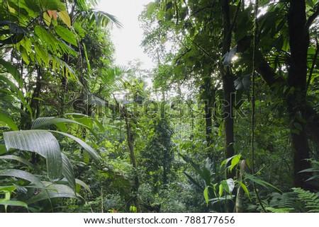 Tropical rainforest in Costa Rica #788177656