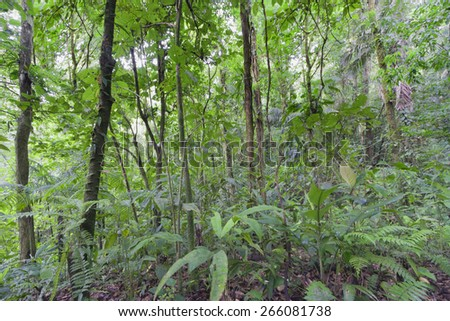 Tropical rainforest in Costa Rica - Arenal Volcano National Park, Alajuela province, Costa Rica