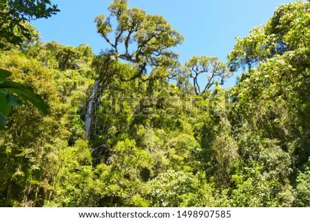 Tropical Rainforest in Madagascar, Africa