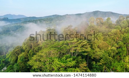 Tropical rainforest in the morning sunrise, Stunning view of Borneo Tropical Rainforest with mist.