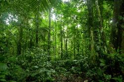 Tropical Rainforest Landscape, Amazon  Yasuni, Ecuador
