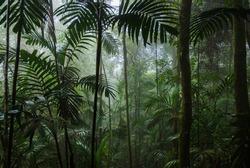 Tropical Rainforest Landscape,Tropical forest,Forest