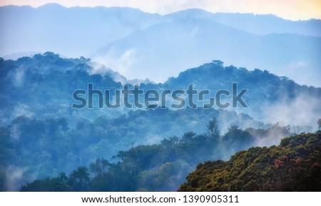 Tropical rainforest of Nyungwe National Park,Rwanda.