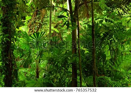 Tropical Rainforest, Queensland, Australia