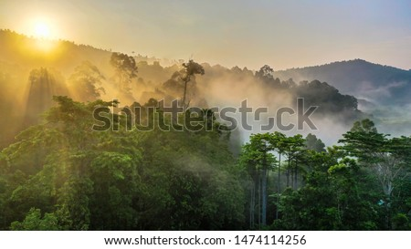 Tropical rainforest, Stunning view of Borneo Rainforest with sunrise mist and fog rays in the morning.
