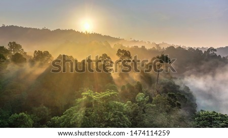 Tropical rainforest, Stunning view of Borneo Rainforest with sunrise mist and fog rays in the morning. Stock photo ©