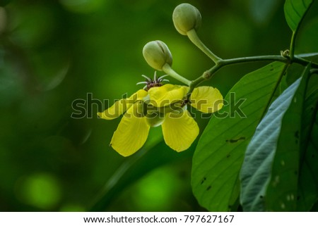 Tropical rainforest, The tropical rainforest has a variety of beautiful species with poison.