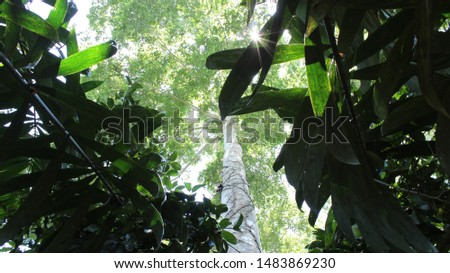 Tropical Rainforest Tree with Leaves and Sky
