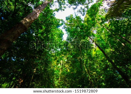 Tropical rainforest uprisen view with sun light beam in southern of Thailand, Deep green forest