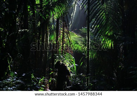 Tropical rainforest with sun rays coming in from above