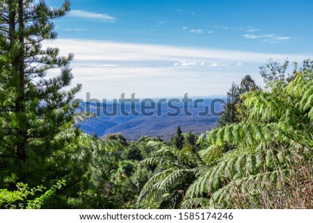 Tropical rainforests in Queensland. Lianas and palm trees form the basis of the forest.