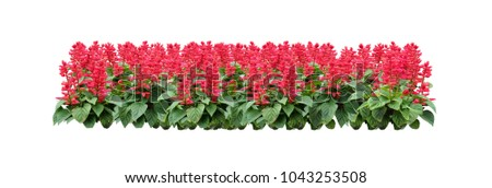 Tropical red flower plant bush tree isolated with clipping path #1043253508