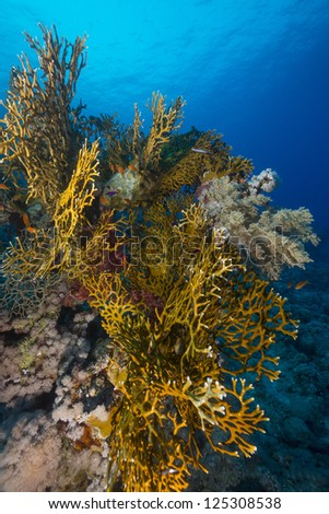 Tropical reef in the Red Sea
