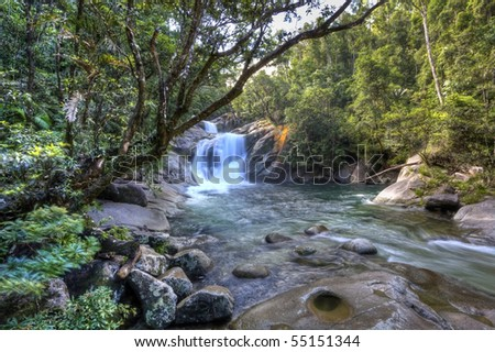 tropical river in the rain forest queensland australia