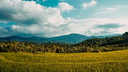 Tropical rural landscape with beautiful rice fields and mountains