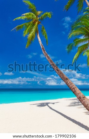 tropical sand beach with palm trees, summer vacation vertical photo