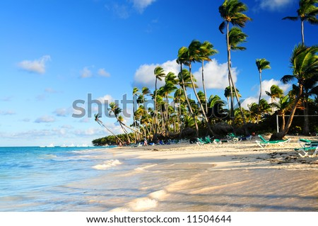Tropical sandy beach with palm trees in Dominican republic