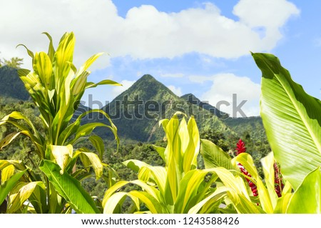 Tropical scene of Martinique mountains, Mount Pelee in the background, Lesser antilles, Caribbean plants in the foreground. #1243588426