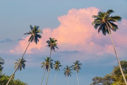 Tropical scenery background with coconut palm trees in front of beautiful sky with pink clouds.