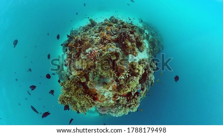 Tropical sea and coral reef. Underwater Fish and Coral Garden. Underwater sea fish. Tropical reef marine. Colourful underwater seascape. Panglao, Bohol, Philippines. Photo stock ©