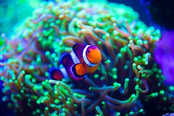tropical sea fish