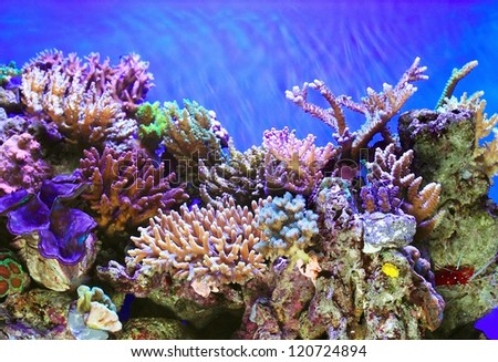 Tropical sea underwater with coral reefs and fish