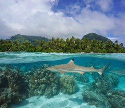 Tropical seascape, coastline with blacktip reef shark underwater, split view over and under water surface, French Polynesia, Huahine island, Pacific ocean, Oceania