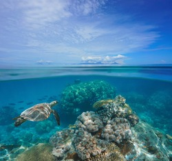 Tropical seascape, coral reef underwater and islands at the horizon, split view over under water surface, south Pacific ocean, Oceania