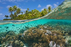 Tropical seascape, many sea anemones with fish underwater and coconut palm trees on the seashore, split view over-under water surface, French Polynesia, Pacific ocean, Oceania