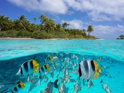 Tropical seascape over and under water, island coastline and group of fish underwater, Pacific ocean, French Polynesia, Oceania