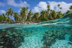 Tropical seascape, school of fish underwater and coconut palm trees on the seashore, split view over-under water surface, French Polynesia, Pacific ocean, Oceania
