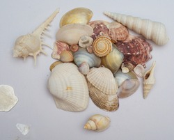 Tropical seashells at white background. Mollusks collection.