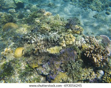 tropical seashore underwater landscape coral reef in sunlight
