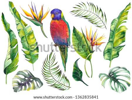 Tropical set with a parrot bird, banana leaves, monstera leaves and strelitzia flowers. Watercolor on white background.