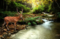 tropical stream and sika deer