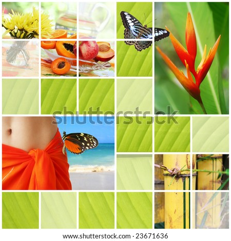Tropical summer collage - stock photo