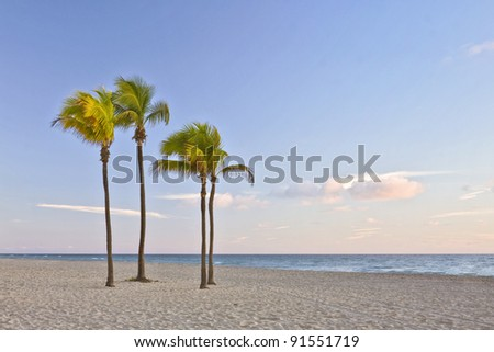 Tropical summer paradise in Miami Beach Florida with palm trees and ocean in the background in early morning #91551719
