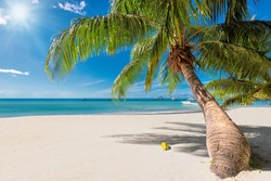 Tropical Sunny beach and coconut palms on white sand in Seychelles. Summer vacation and tropical beach concept.