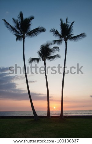 tropical sunset in Hawaii Big Island