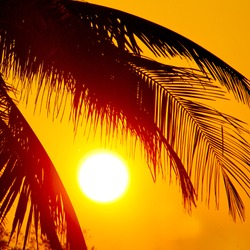Tropical sunset, palm trees  and big sun