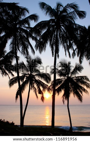 Tropical sunset, palm trees , taken in Varkala, India