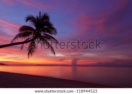 Tropical sunset with palm tree silhouette at beach - stock photo