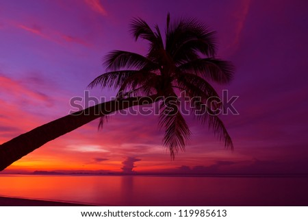 Tropical sunset with palm tree silhouette at beach