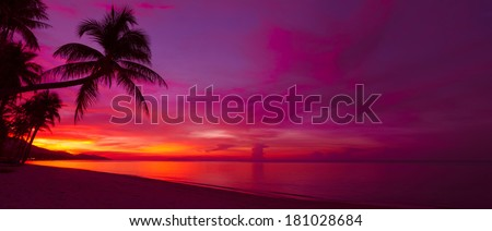 Tropical sunset with palm tree silhouette panorama