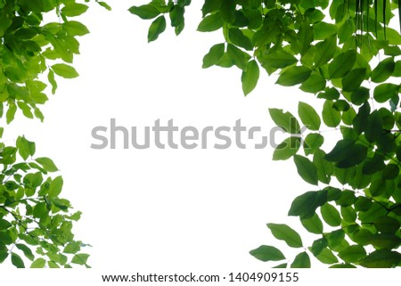 Tropical tree leaves on white isolated background for green foliage backdrop  #1404909155