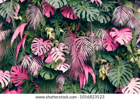 Tropical trees arranged in full background Or full wall There are leaves in different sizes, different colors, various sizes, many varieties. Another garden layout.as background with copy space. #1056823523