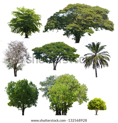 Tropical  trees isolate on white background